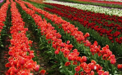 Flower Farm PCB-0008